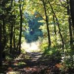 Kent Woodland